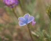 2nd Jun 2020 - wildflower butterfly