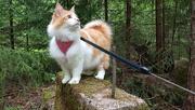 5th Jun 2020 - Forest cat