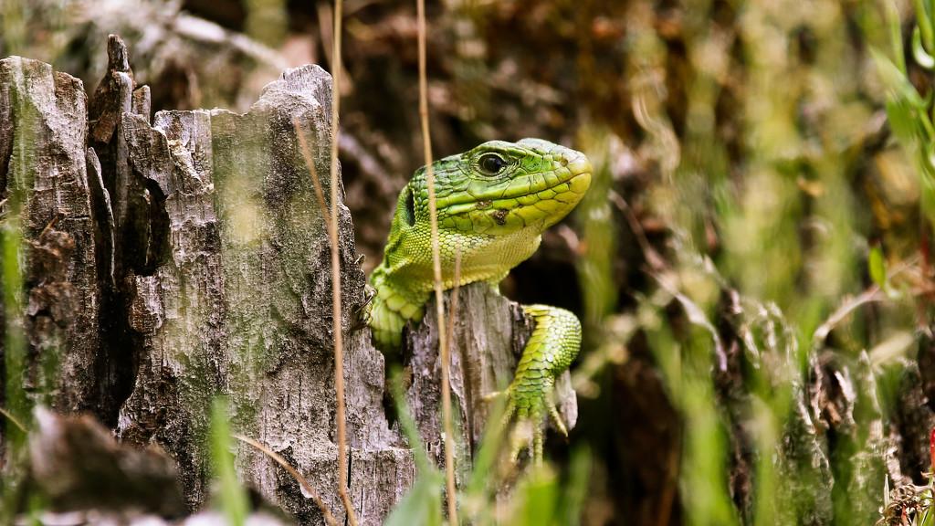 Fauna through a telephoto lens by petaqui
