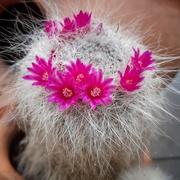 5th Jun 2020 - Fluffy cactus
