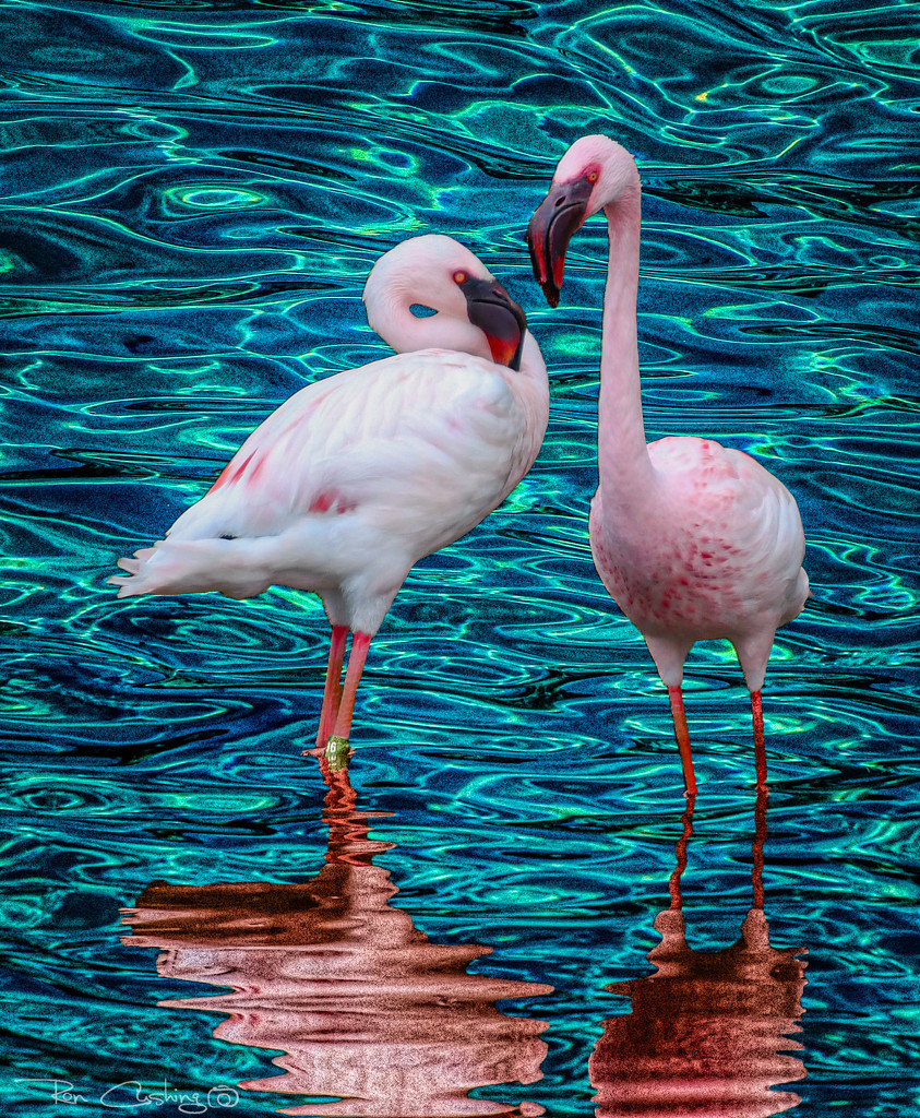 Flamingo Friday '20 15 by stray_shooter