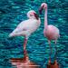 Flamingo Friday '20 15