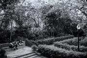 5th Jun 2020 - Laribal Garden