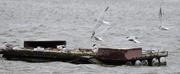 6th Jun 2020 - breed terns on an island
