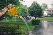 5th Jun 2020 - When It Rains It Pours