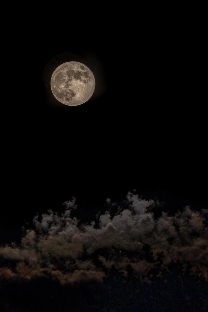 Strawberry Moon  by jyokota
