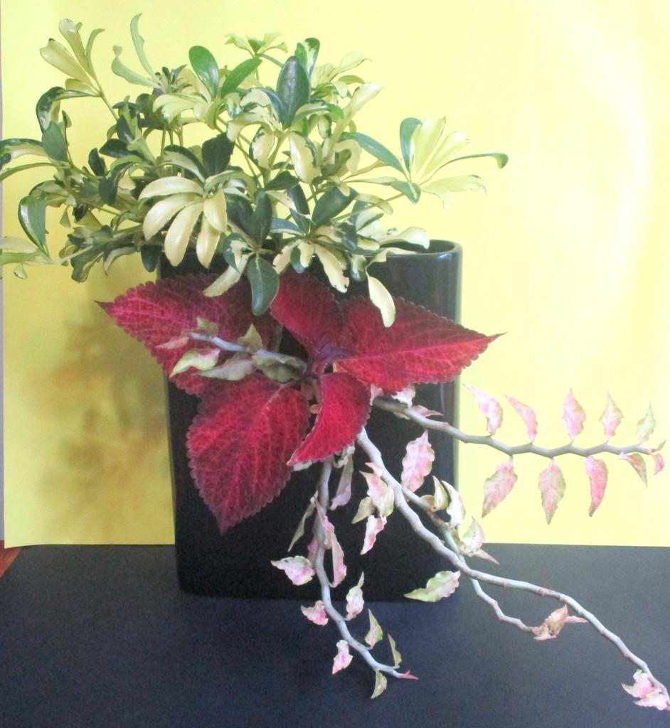 Latest Ikebana arrangement by 777margo