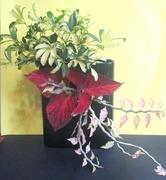 6th Jun 2020 - Latest Ikebana arrangement