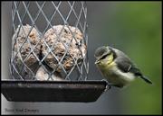6th Jun 2020 - RK3_8024 One of the fledglings