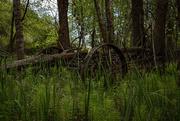 6th Jun 2020 - Hidden in the Woods
