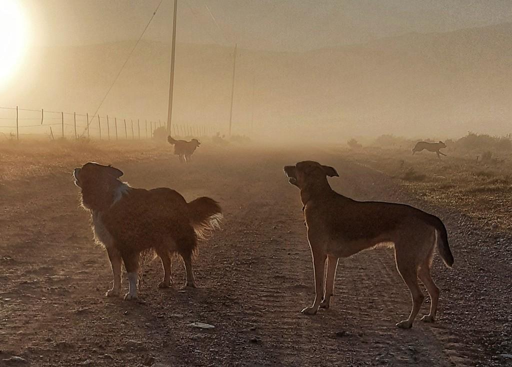 Misty morning  by salza