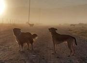 6th Jun 2020 - Misty morning