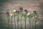 6th Jun 2020 - Rose Garden