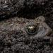 Monster in the Mud by farmreporter