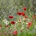 Fields Edge by carole_sandford