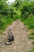 6th Jun 2020 - Calico tabby cat, path towards Debden House