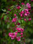 7th Jun 2020 - Blossoms