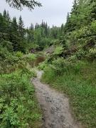 7th Jun 2020 - Down A Muddy Trail