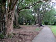 10th Jun 2020 - Morning walk along Petrie Creek
