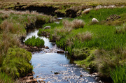 8th Jun 2020 - Laxdale Burn