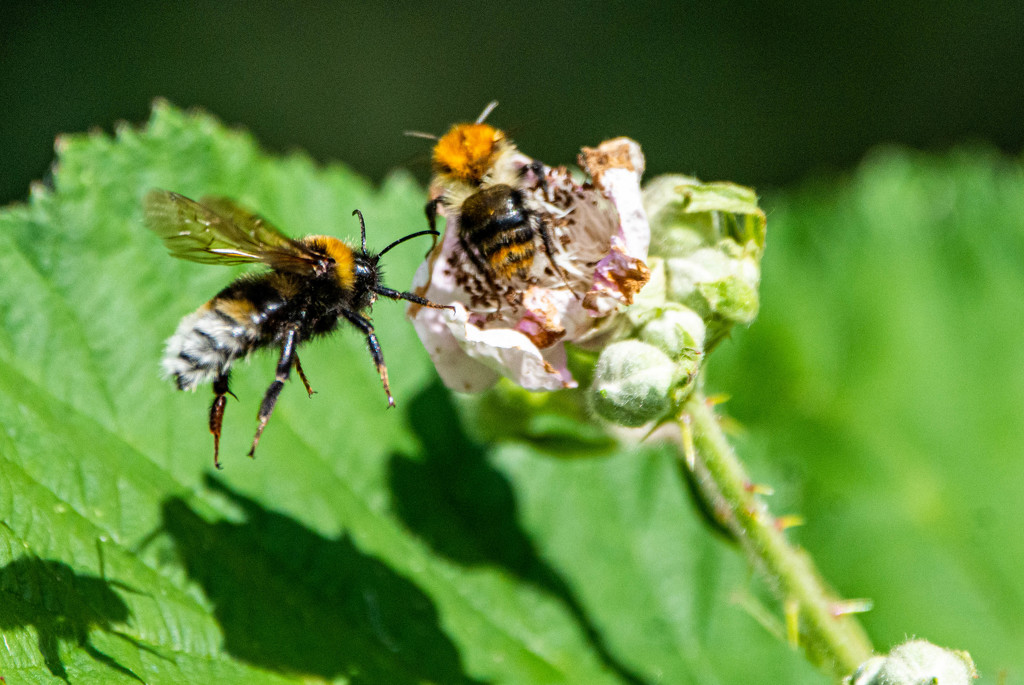 Bee and Queue by stevejacob