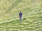 7th Jun 2020 - Mowing the grass