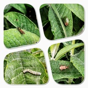 9th Jun 2020 - Bug community