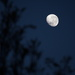 Morning Moon - 7.30am