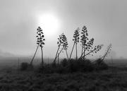 9th Jun 2020 - Aloe flowers