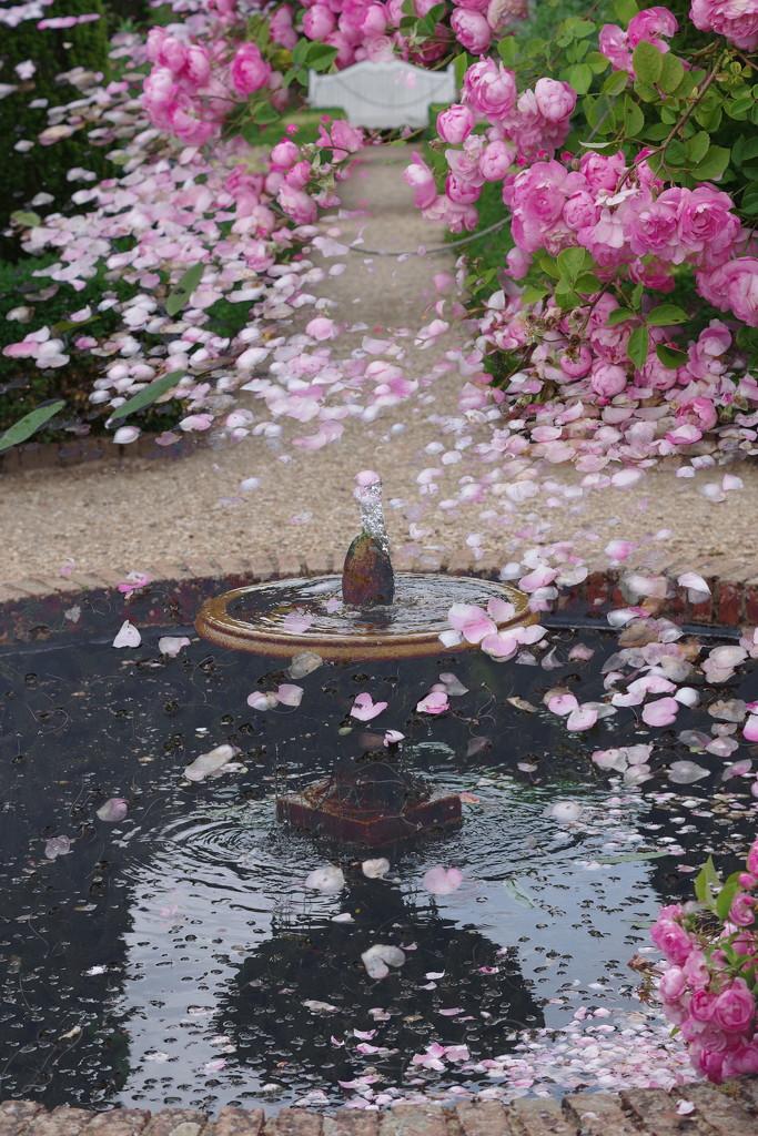 Confetti Fountain by thedarkroom