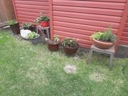 9th Jun 2020 - A Little Herb Garden
