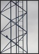 9th Jun 2020 - bird
