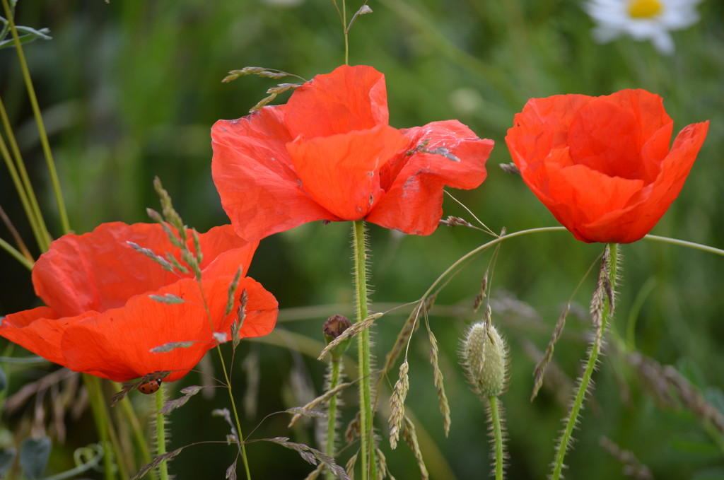 Spot the Ladybird by wakelys