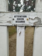 10th Jun 2020 - Beware of weird dogs