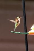7th Jun 2020 - Humingbird At The Oriole Feeder