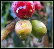 12th Jun 2020 - Raindrops on Coffee Beans