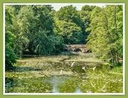 11th Jun 2020 - The River Stour,Blandford