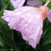 11th Jun 2020 - Water Droplets