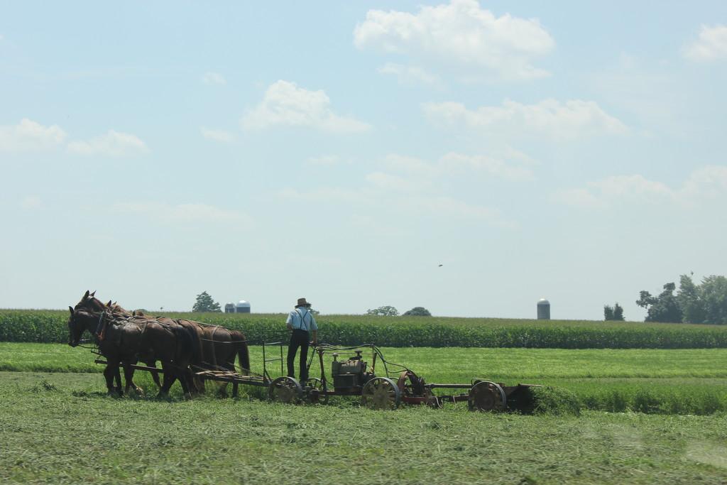 Farm Workers' Day by spanishliz