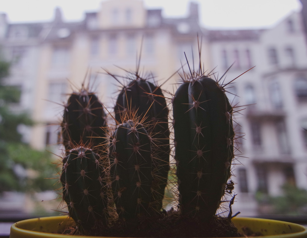 Kaktus by toinette