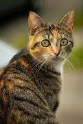 11th Jun 2020 - Neighbour's cat
