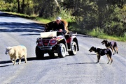 12th Jun 2020 - A farmer and his dogs