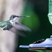 A Hummingbird Finally Came to Visit! by jyokota