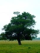 12th Jun 2020 - A tree