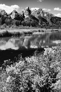 12th Jun 2020 - Grand Tetons Reflections in Black and White