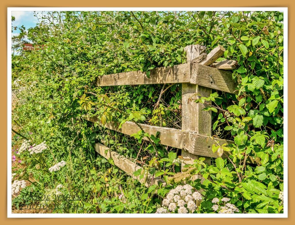 An Old Fence by carolmw