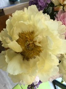 11th Jun 2020 - Peony from the run over flowers