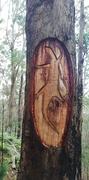 10th Jun 2020 - Tree carving