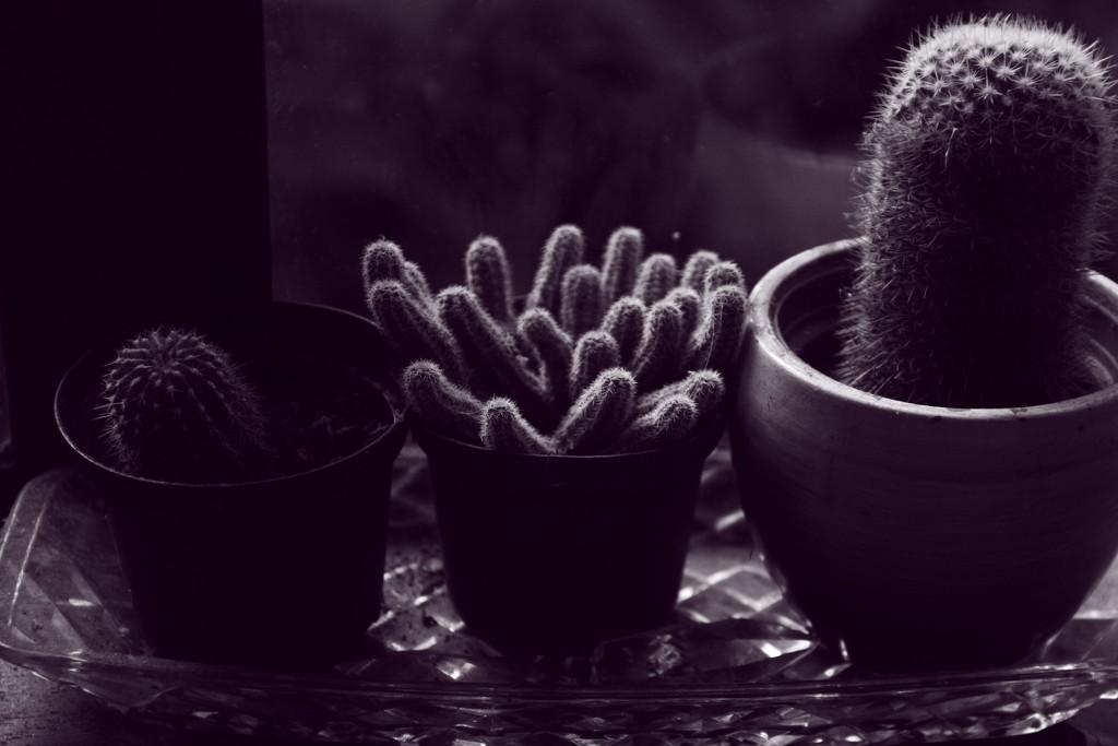purple prickles by kali66