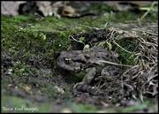 14th Jun 2020 - RK3_8776 Mr Toad